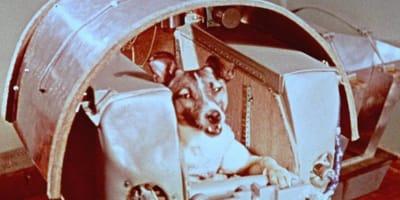 Laika Hund im All