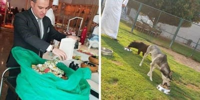 Dubai chef feeds brunch to Abu Dhabi animals