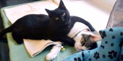 Katze kümmert sich um andere Katze
