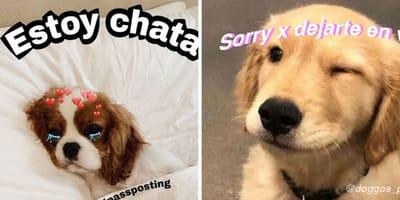 Memes de perros y gatos de Instagram