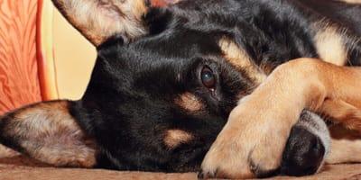 Hund hat Mundgeruch
