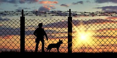 Hund im Gefängnis