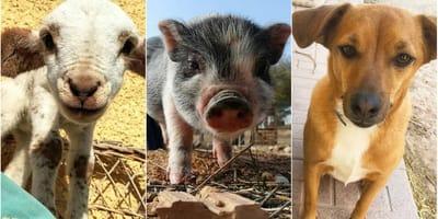ayuda construccion santuario animales cordoba espiritu libre