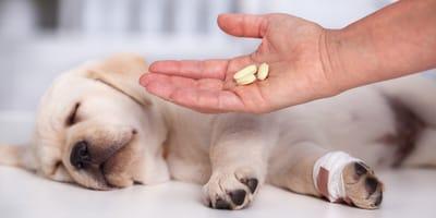 Alles zum Thema Wurmkur bei Hunden