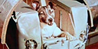 Never mind Buzz Aldrin: it's the 62nd anniversary of the first dog in space!