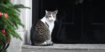 Il gatto Larry a Downing Street