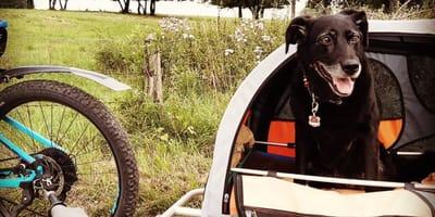 Hund im Fahrradanhänger