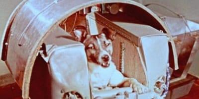 Łajka - pies, który poleciał w kosmos!