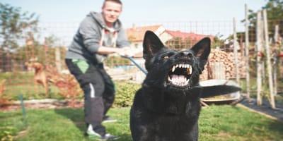 ataques de perro