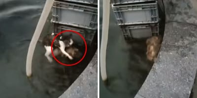 perro rescata gato