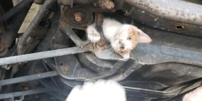 Kot_uwieziony_w_zawieszeniu_samochodu