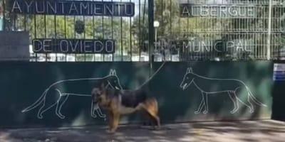 perro abandonado albergue oviedo