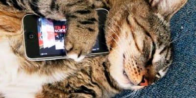 Descubre lo que te dice tu gato gracias a este aparato que... ¡descifra sus maullidos!