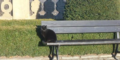 Koty witały gości na dziedzińcu zamku i przechadzały się po całym jego terenie.