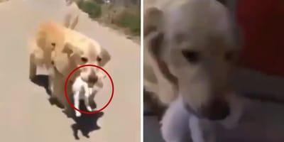 perro salva vida gato abandonado