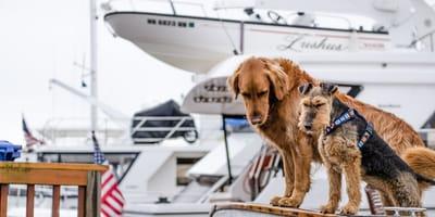 cani su una nave