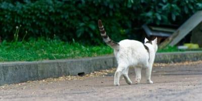 gatto cammina in un parco