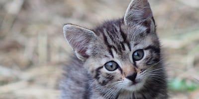 Mały_kot_patrzy