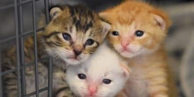 gatitos salvados morir desguace