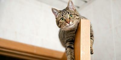 Un gato subido a una puerta