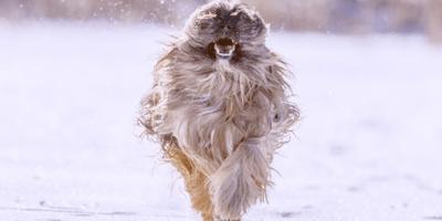 perro salta sobre mí