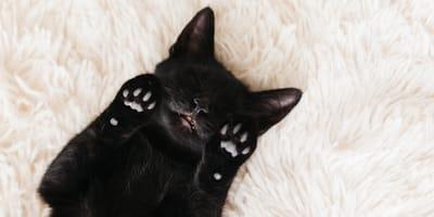 mitos y leyendas sobre gatos