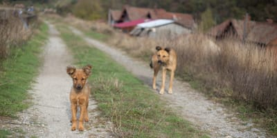 Auslandsadoption von Hunden: Was man vorher unbedingt wissen muss