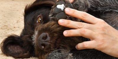 Sanfte Hausmittel und Maßnahmen gegen juckende Pfoten beim Hund