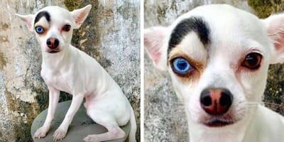 Od tego niezwykłego psa po prostu nie da oderwać się wzroku!