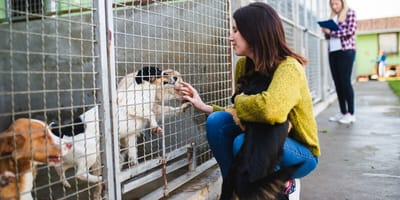 Diese Dinge sollten Sie beachten, bevor Sie einen Hund adoptieren