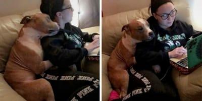 Sie adoptiert einen Pitbull und ahnt nicht, was kurz darauf aus ihrem Leben wird