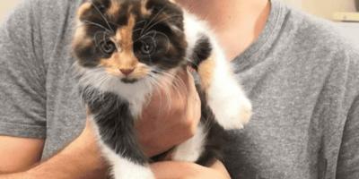 La gatta Flora