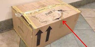 caja carton basura gatos abandonados