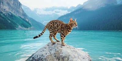 Internationale Catfluencer