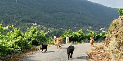 vacaciones galicia perro