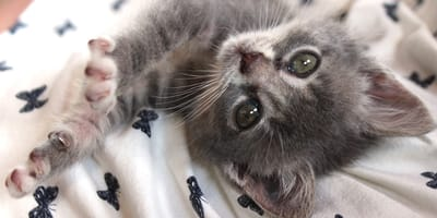 gattino tenero in primo piano