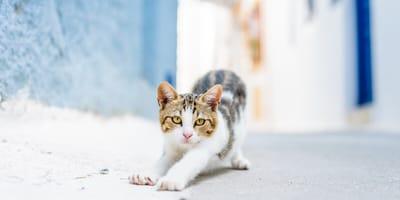 gato se escapa