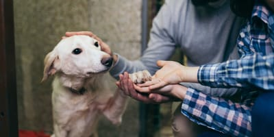 Was kostet eine Adoption aus dem Tierheim?