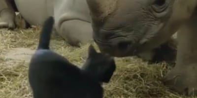 The cat and rhino are now best friends