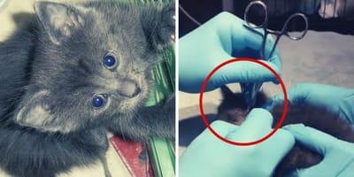 Veterinario visita un gatto malato, quello che scopre è da brividi (Video)