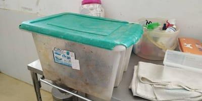 contenitore di plastica con dentro due cuccioli