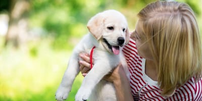 How to train your puppy like an expert