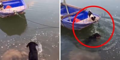 perro salvando a un cachorro agua