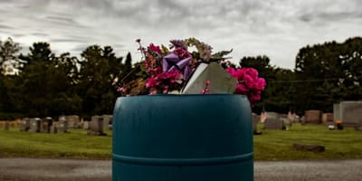 video arrojan gatitos contenedor basura cementerio francia