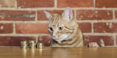 Katze und Münzen