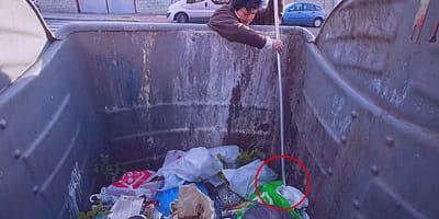 hombre encuentra camada 11 gatos contenedor basura