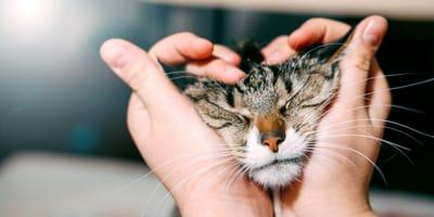 Cómo acariciar a un gato de manera correcta