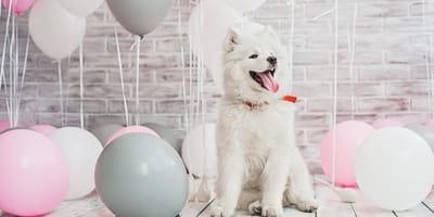 Razas de perro mas caras del mundo
