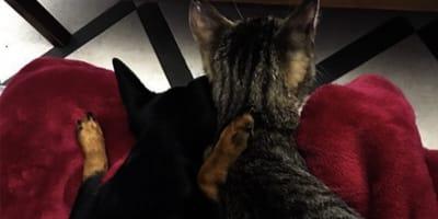 gatto e cane su coperta rossa