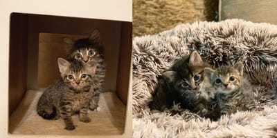 Kitten in basket is taken to shelter, but then they make a surprising discovery